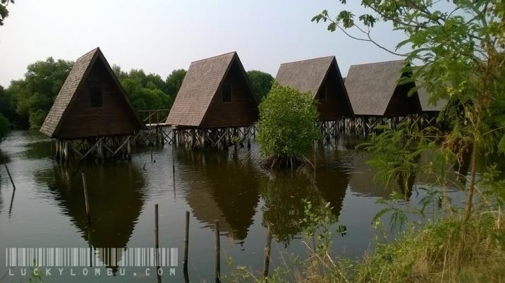 Kalau capek, atau memang mau coba bermalam di tengah hutan mangrove, ada 18 pondok seluas sembilan meter persegi yang bisa disewa. Kamar mandi di luar ya.
